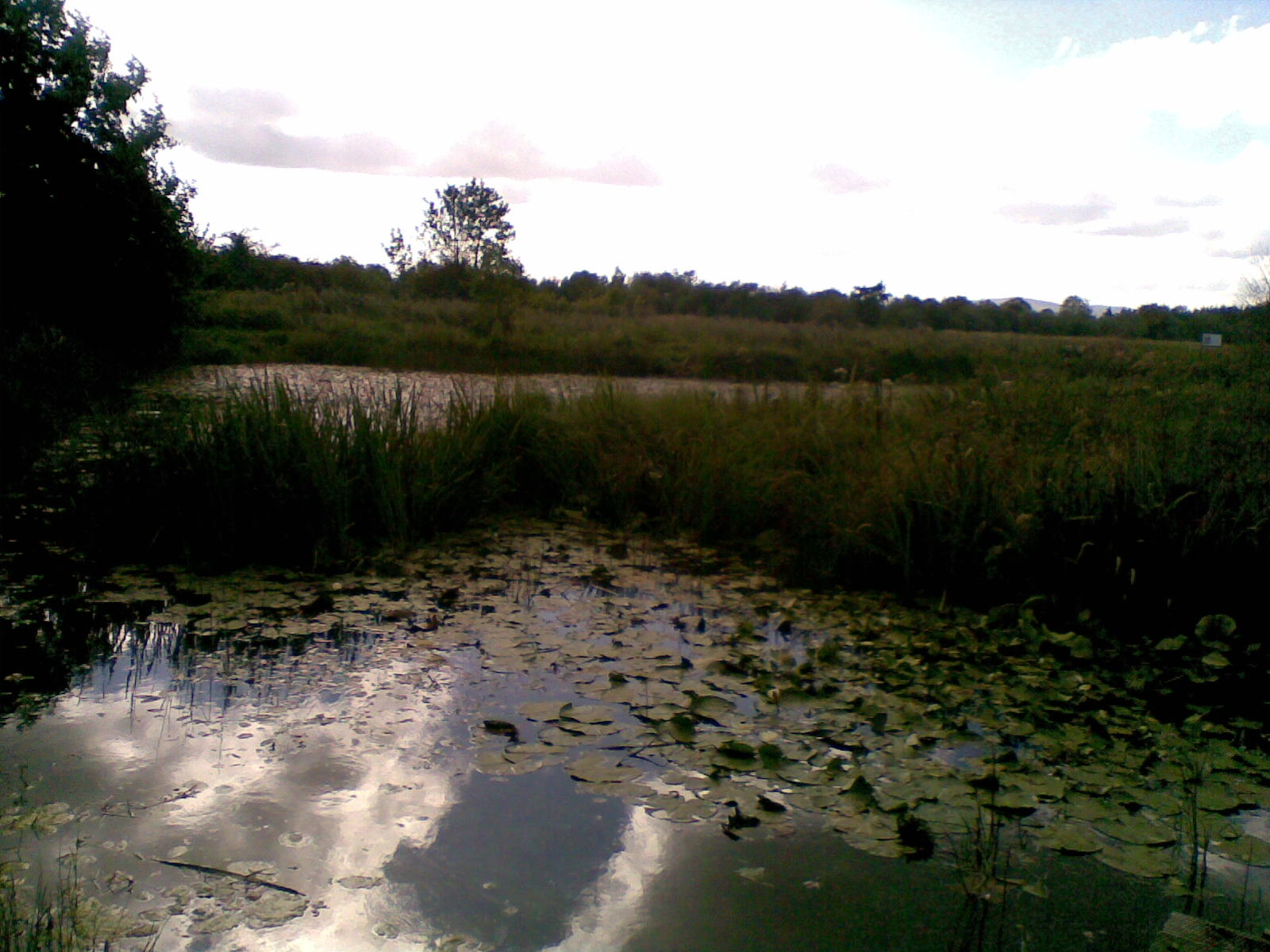 Lagoon on the Cabragh Wetlands