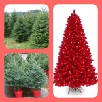 Chooseday's Choice! ~ Artifical or locally grown Christmas trees?