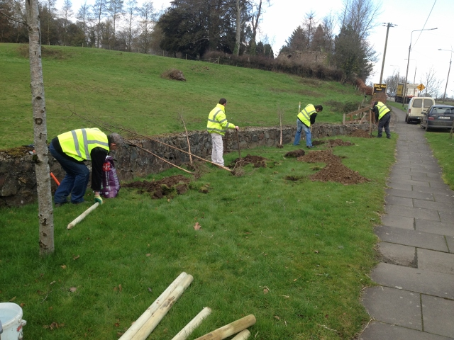Ferns Tidy Towns Group planting a copse of trees