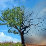 Climate change – What can we do?