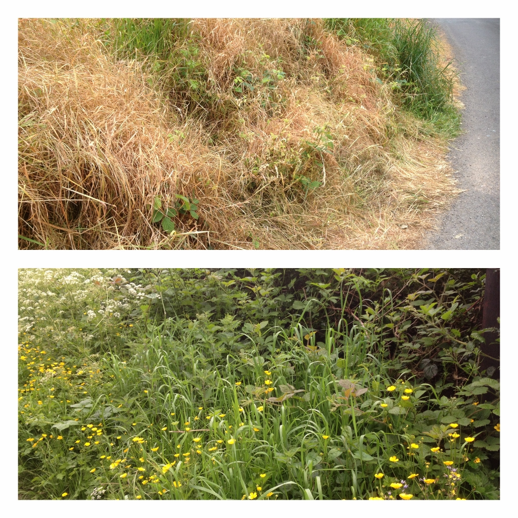 Beautiful wildflowers destroyed with Herbicide use