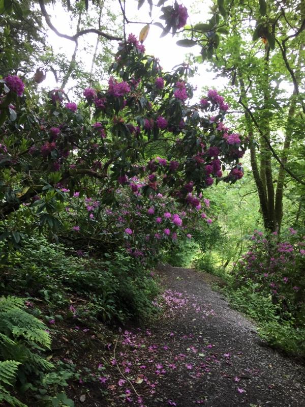 Beautiful woodland walk