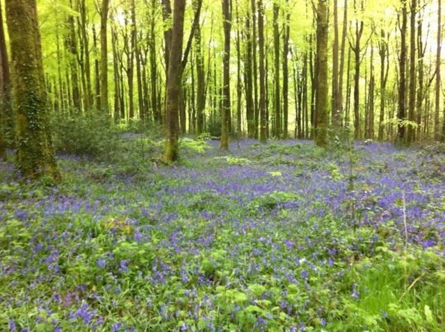 Kilbora Woods, Ferns, Co. Wexford.